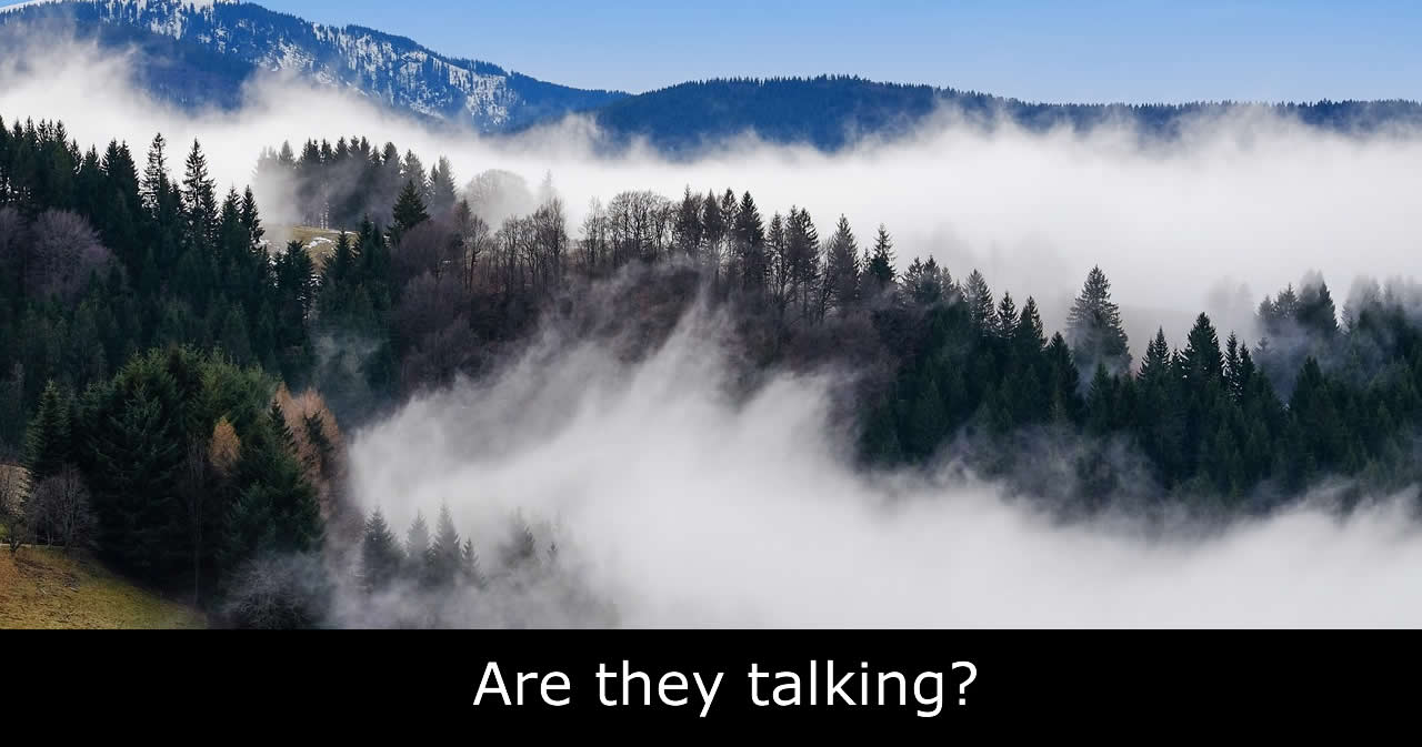Do trees talk? Are they communicating?