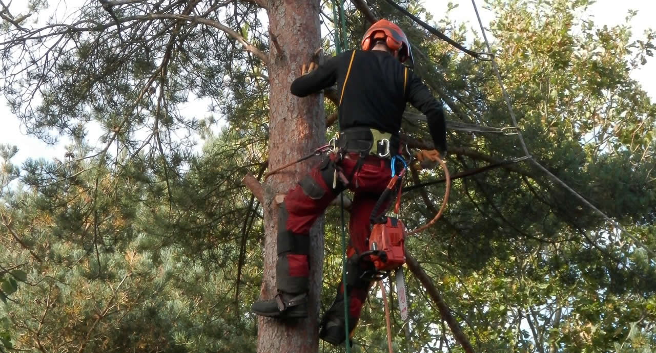 Top reasons to hire a tree surgeon