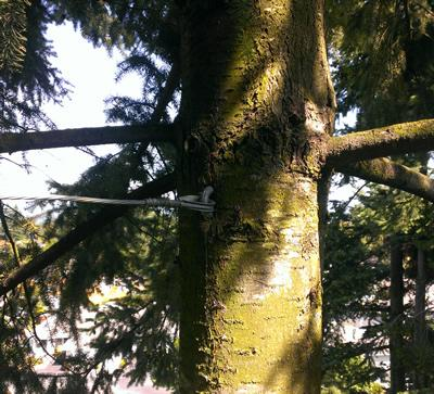 Tree Cable Bracing