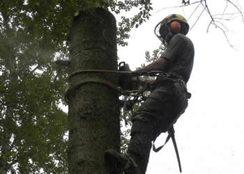Tree felling, removal & dismantling