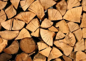 Logs and woodchips